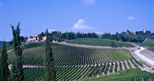 Florence, Italy - Vineyards in Tuscan Hills